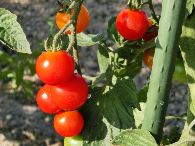 カット野菜の産地表示に関する得する話