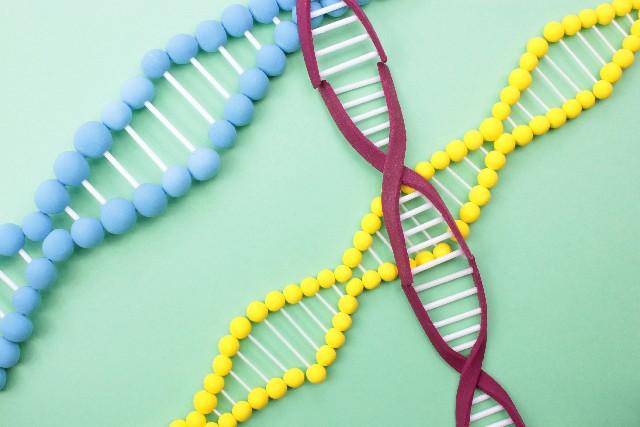 サラダ油の原料が遺伝子組み換え作物であることによる危険性