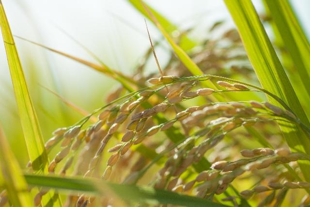 サラダ油と米油サラダ油の違い
