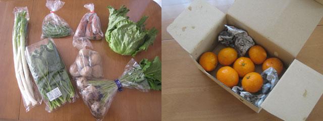 かぶ、ジャガイモ、ニンジン、長ねぎ、ほうれん草、レタス、いんげんの7種類