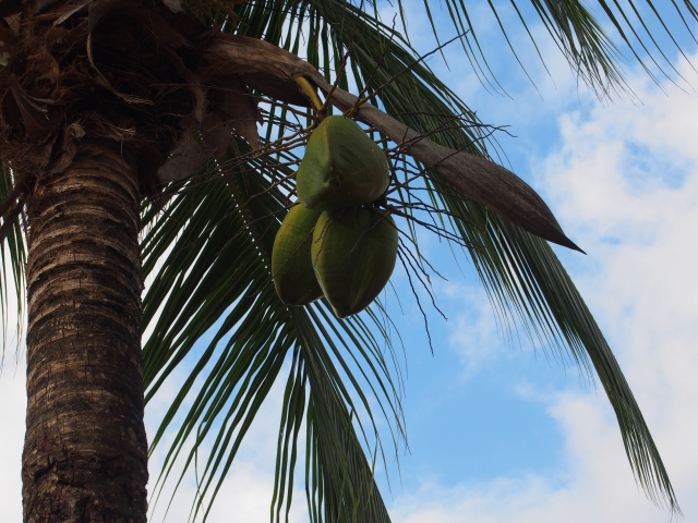 ココナッツオイルの成分