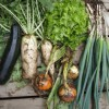 無農薬にこだわっている食材宅配ベスト3