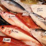 らでぃっしゅぼーやの魚のおすすめポイントを調べてみた結果