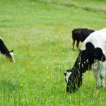 宅配牛乳より安い!オイシックスの牛乳飲み放題について調べてみた結果